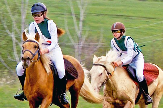 «Небесные кони» Татарстана: как изачем возрождают национальную породу лошадей
