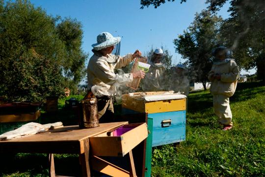 Айрат Хайруллин: «Каждый год обрабатывают поля, ногибели пчел небыло. Странно, да?»