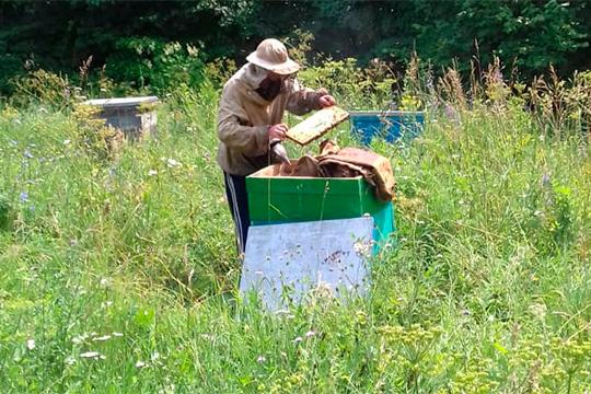 Гибель пчел стала поводом для обращения депутатов Госдумы в генпрокуратуру