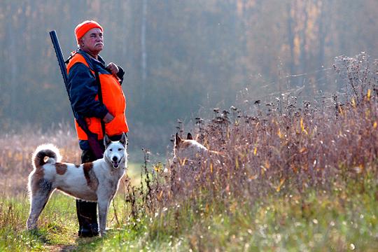 Охотники утверждают, что в течение уже двух осенне-зимних сезонов наблюдают полное отсутствие сохатых