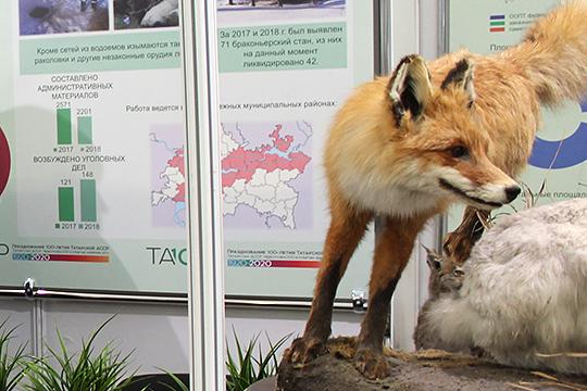 По документам количество лосей в целом по Татарстану превышает число лисиц и кабанов, что противоречит здравому смыслу