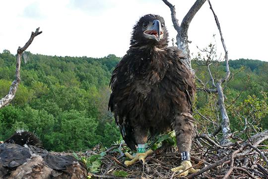 «Это просто год такой неудачный»: Закамье покидают птицы извери