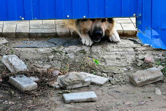 В истории с расстрелянными щенками версии Колесниковой и Кутуевой разнились, начиная от количества убитых и выживших щенков до личности предполагаемого преступника