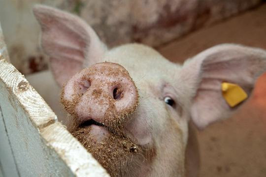 Репортаж недели: запах денег нататарстанских полях
