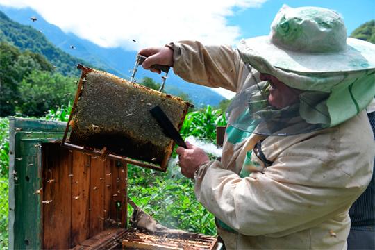 Глава союза пчеловодов: «Заявляющие об убытке в триллион рублей умножили пол на потолок»