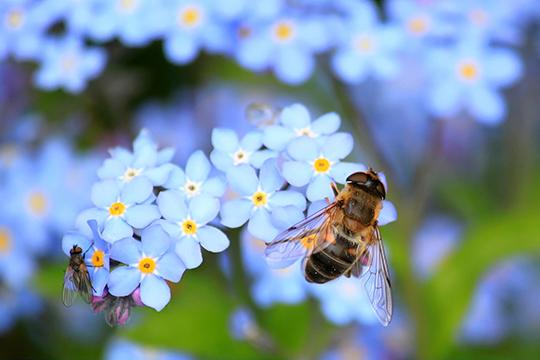 «Вмире главное предназначение пчелы— это опыление, сохранение флоры ифауны»