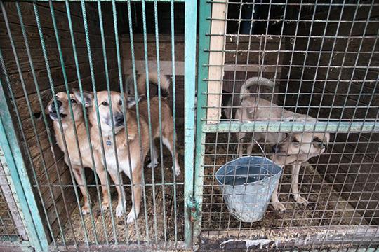Согласно новому закону, животные без владельцев должны быть определены в приют, а умерщвление и отстрел, как было раньше, запрещено