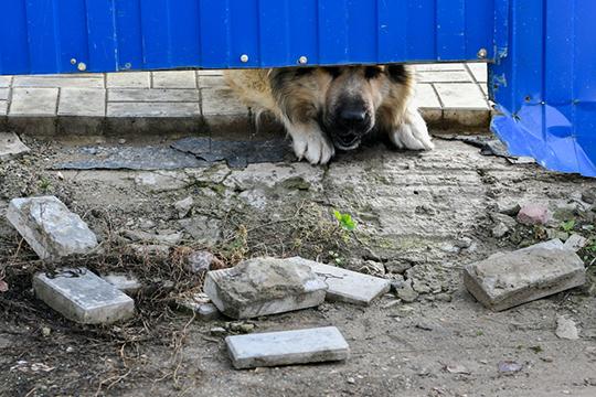 Сколько именно денег получит тот или иной район на эти цели будет рассчитываться исходя из принятого норматива количества бездомных животных, который утвержден в Татарстане в феврале этого года